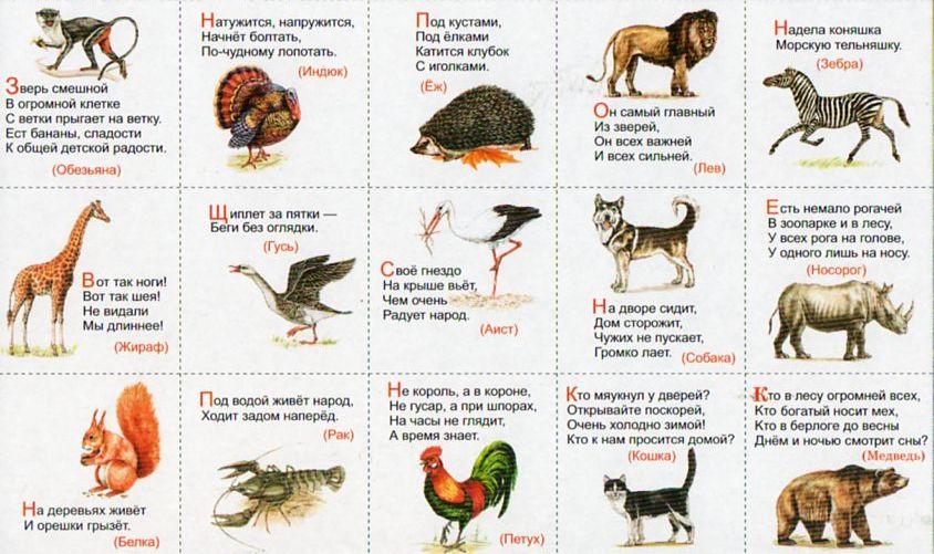 Загадки для детей про животных